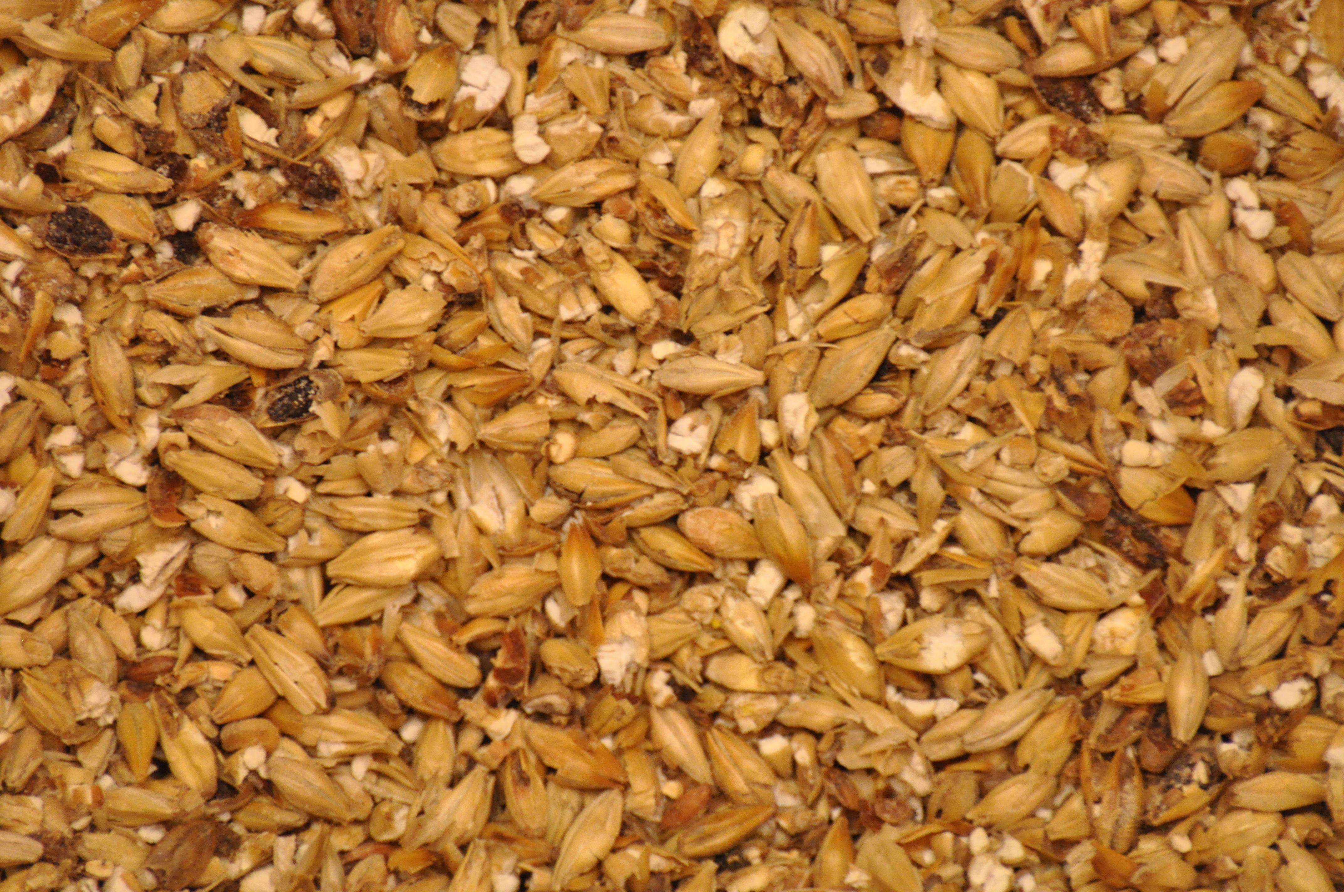 milled_malted_barley